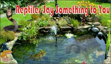 Reptiles Say Something to you