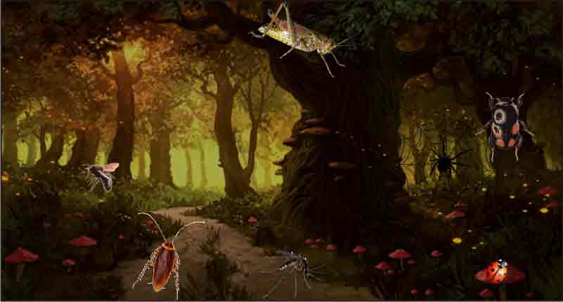 Role of Insects in Omen